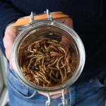Minus Farm, insecte comestibile pentru hrană durabilă